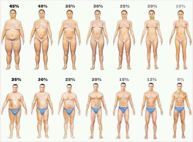 Generally how different body fat percentages can look.